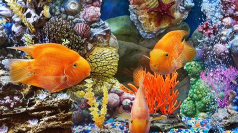 seawall luau grounds fish underwater world tropical fish desktop background hd