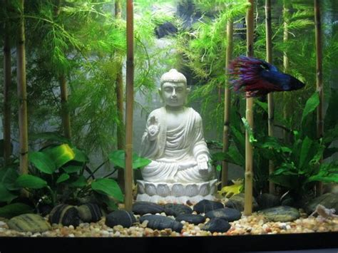 betta fish tank setup ideas    statement