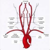 doppler vasi epiaortici eco color doppler tsa carotidi diagnostica