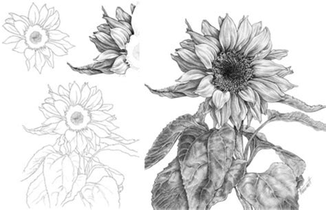 How To Draw Sunflowers In A Vase by Sunflower In Drawing And Painting Tutorials