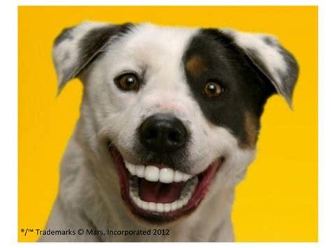 dentastix puppy pin smile on