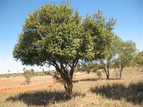 boom on bumble uruguay natural internacional chacra xcvi jardin