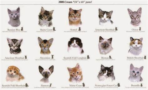 Cat Breed List   The Kitty Crew