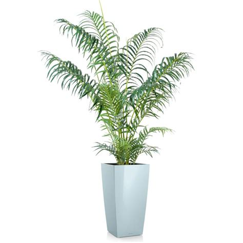 Délicieux Plante Exterieur Artificielle #7: Areca-artificiel-en-pot.jpg