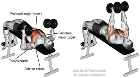 upper back pain after bench press decline hammer grip dumbbell bench press exercise full