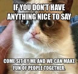 Sarcastic Cat Meme - grumpy cat cats and grumpy cat humor on pinterest