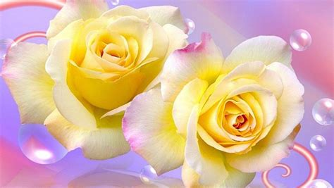 free wallpaper yellow roses free yellow rose wallpapers wallpaper cave