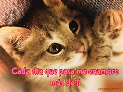 imagenes de amor de gatitos tristes imagenes de amor de perritos y gatitos