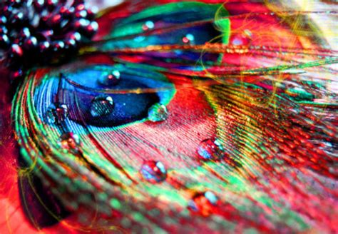 beautiful colors beautiful colors feather girly heart image 431586 on favim com