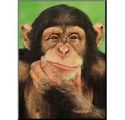 Picture Of A Monkey With His Hand Under Chin Like Hes Thinking