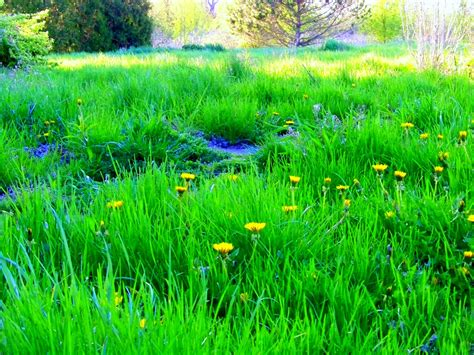 green green grass of home by madgardens on deviantart