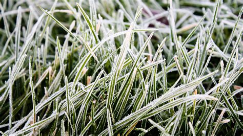 winter lawn care winter lawn care tips gb lawncare