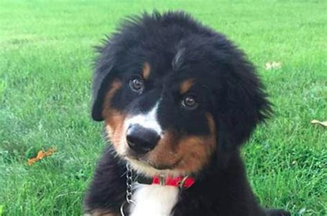 can you breed and dogs can you identify the breed by its picture