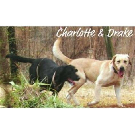 lab puppies for sale in louisiana puppies in louisiana labrador retriever breeder in amite louisiana listing id 22009