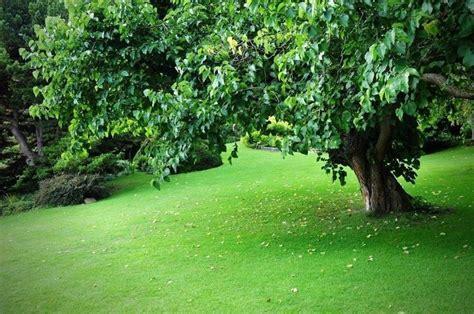 tipi di erba da giardino erba prato prato erba e prato caratteristiche