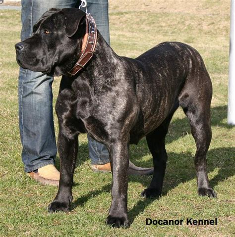 dangerous breeds most aggressive breed home types
