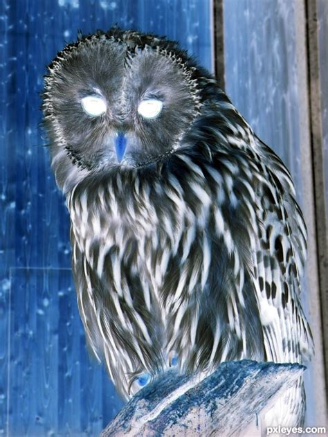 printable scary owl image gallery scary owl