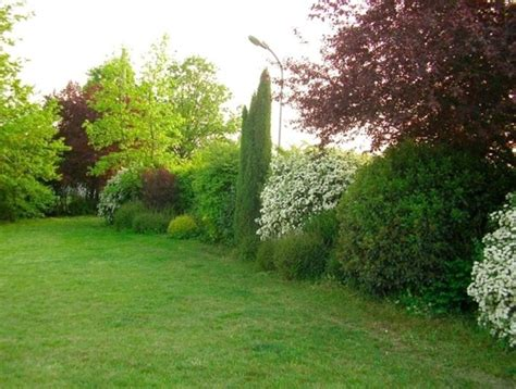 cespugli giardino siepi miste siepi siepi con piante diverse