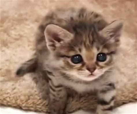 クロアシネコのあかちゃん | かわいい動物の動画ブログ