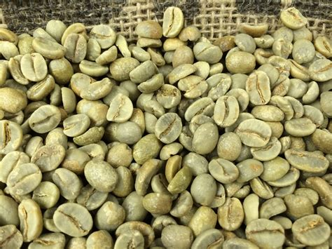 Green Coffee green coffee coffee roaster starter pack cafe hormozi