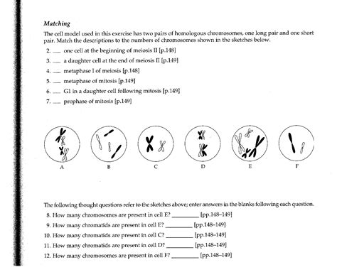 mitosis coloring sheet reading notes flashcards more exam 3 questions centromere haploid