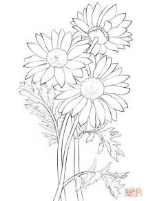 Coloring Pages For Daisies coloring page free printable coloring pages
