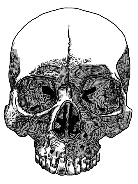 sketchbook pro transparent background image gallery transparent skull