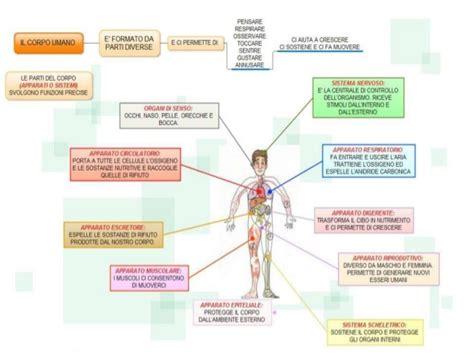 il corpo umano gli organi interni esplorando il corpo umano pw
