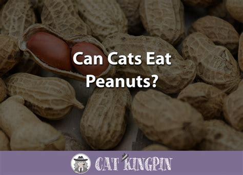 can cats eat peanuts cat kingpin