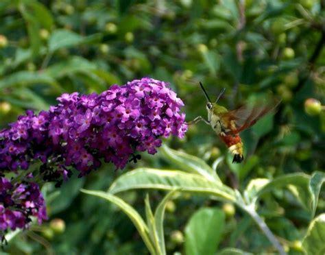 insetti volanti catastrofe ecologica in germania scomparsi tre quarti di