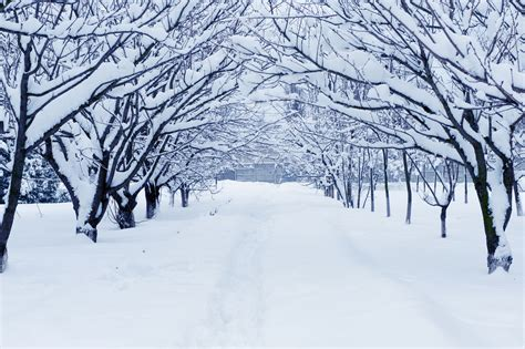 7 tips for taking photographs in the snow b h explora
