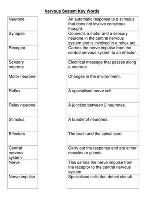 Systems Matching Worksheet Answers by Nervous System Key Words Worksheet By Bobfrazzle