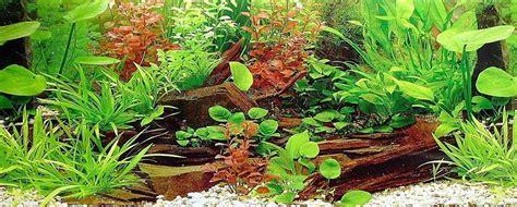 fische für 60l aquarium 6716 teppich f 252 r wohnzimmer grau