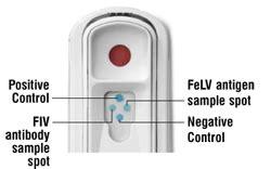 test negativo beta positive conhe 199 a a aids felina www blogfelino br