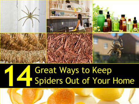 How To Keep Spiders Out Of The House by 14 Great Ways To Keep Spiders Out Of Your Home Naturally