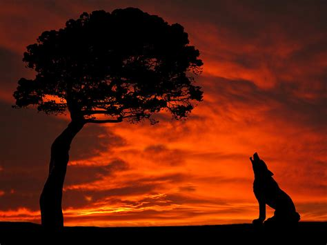 Elephant Print Duvet Cover Wolf Calling For Mate Sunset Silhouette Series Photograph
