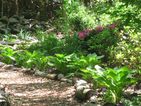 From Wild Patch to Woodland Garden