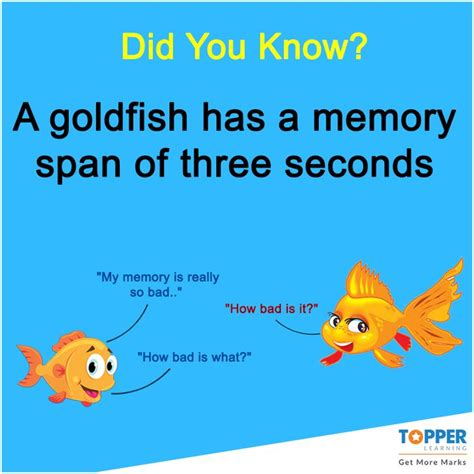 memory span didyouknow a goldfish has a memory span of three seconds fact facts