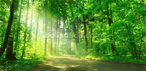 wallpaper for walls forest forest path in sunshine wallpaper wall mural wallsauce