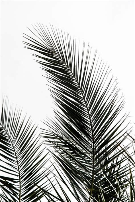high resolution printable wall art palm leaves art print by mareike b 246 hmer graphics and