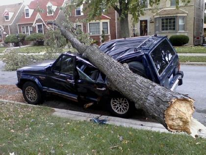 auto insurance when a tree debunking auto insurance myth 3 your insurance will cover you if your car is stolen