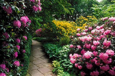 Pretty Flower Gardens Beautiful Flower Garden Flower Forest Cool Wallpapers Wonderful Flower Garden