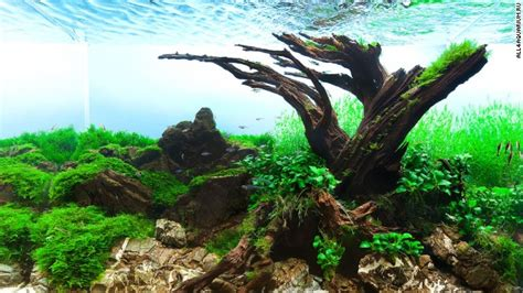 Java Moss Aquascape by Pimp Fish Tank This Is The Eerie Beautiful World Of Aquascaping Cnn