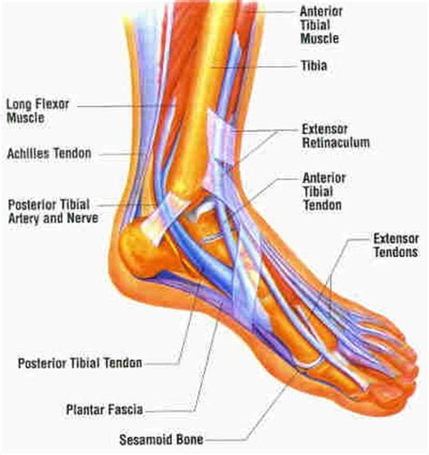 ankle diagram running for pearl june 2011