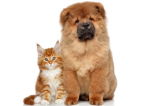 wallpaper cat and dog hd cat dog wallpapers pictures images