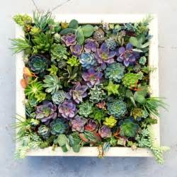 gallery for gt succulent garden wall