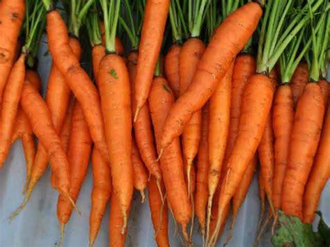 alimenti anticancro the vegan soul alimenti anticancro le carote