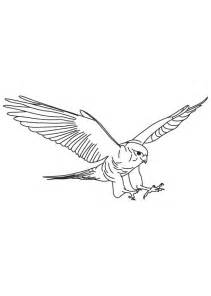 Flight Coloring Page  Download Free Brown Falcon In sketch template