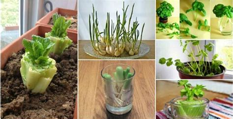 How To Grow A Vegetable Garden In An Apartment How To Grow An Organic Fruit And Vegetable Garden In Your