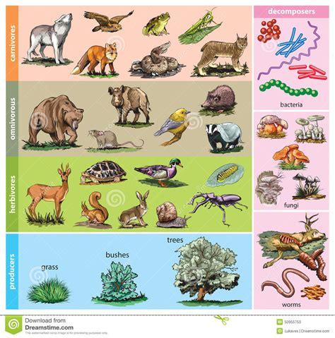 cadena alimenticia jirafa satz neun vektorskizzen vektor abbildung illustration von